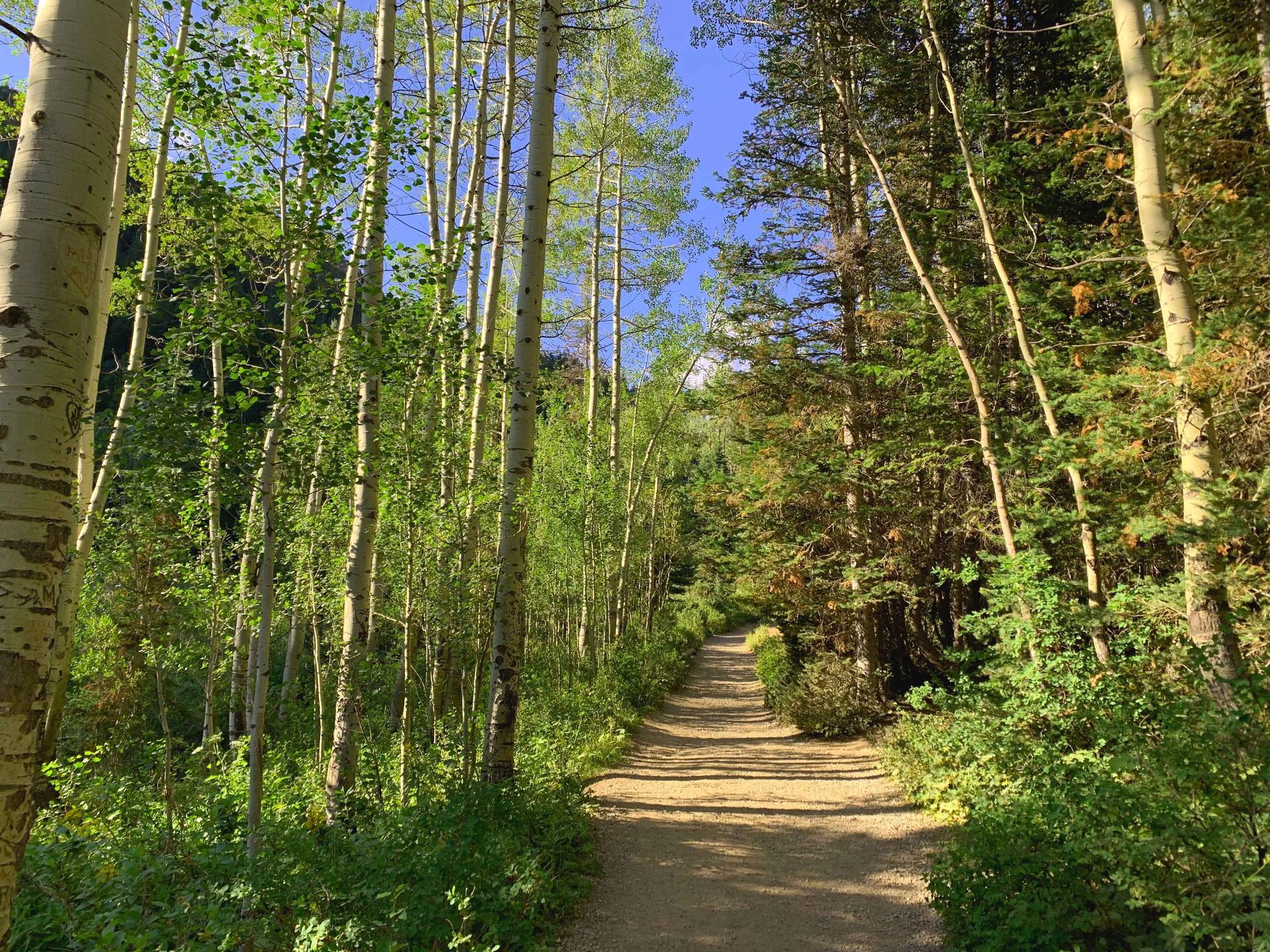 Donut Falls Trail Trees