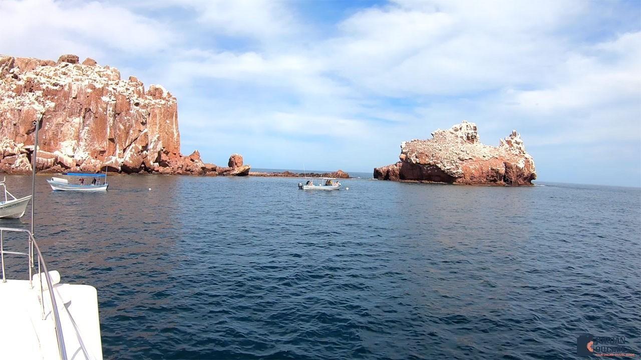 Sea Lion Colony in the Sea of Cortez