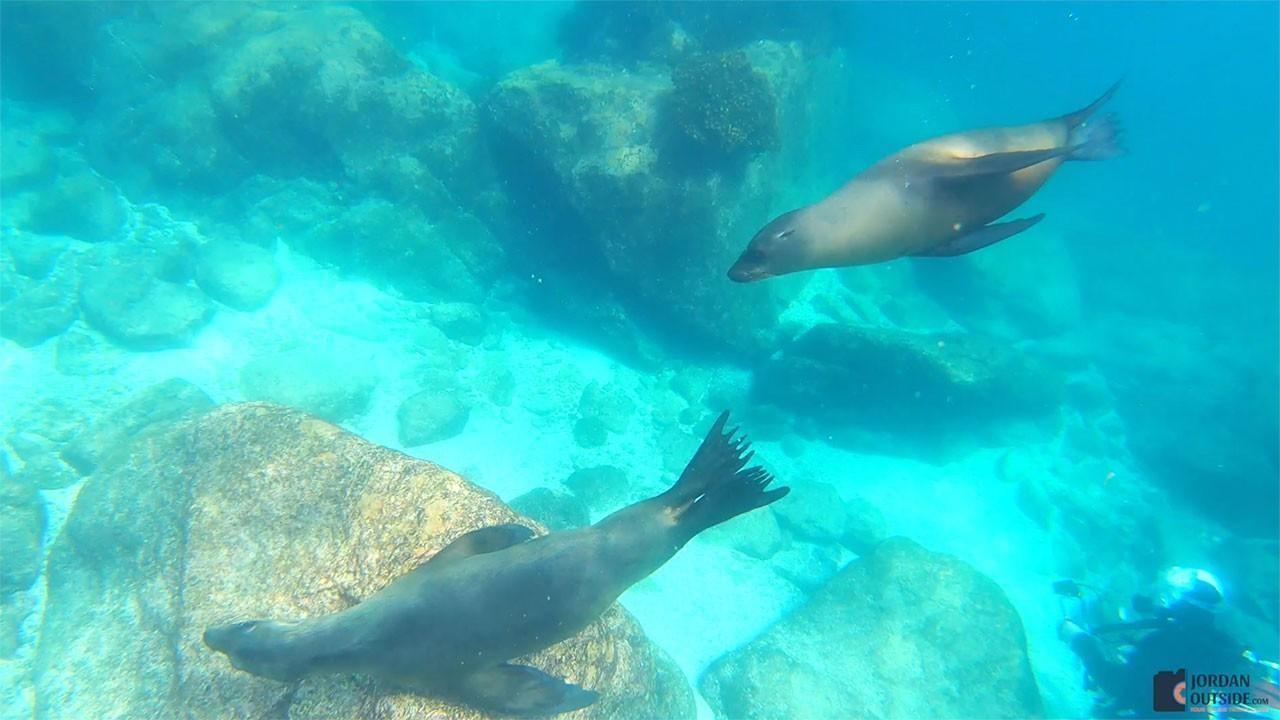 Sea Lions swimming past us