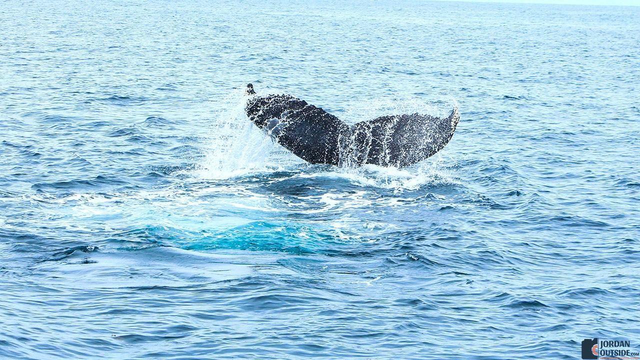 Whale fin in the Sea of Cortez