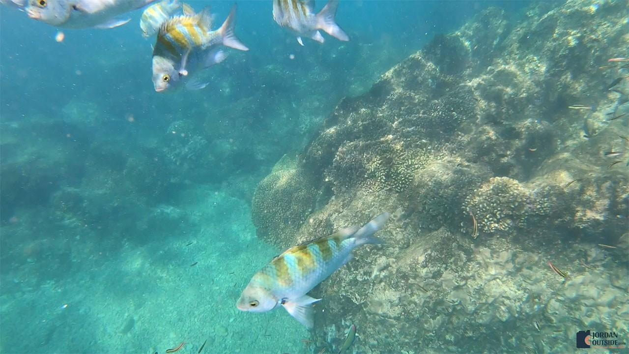 Coral Reef in Cabo San Lucas