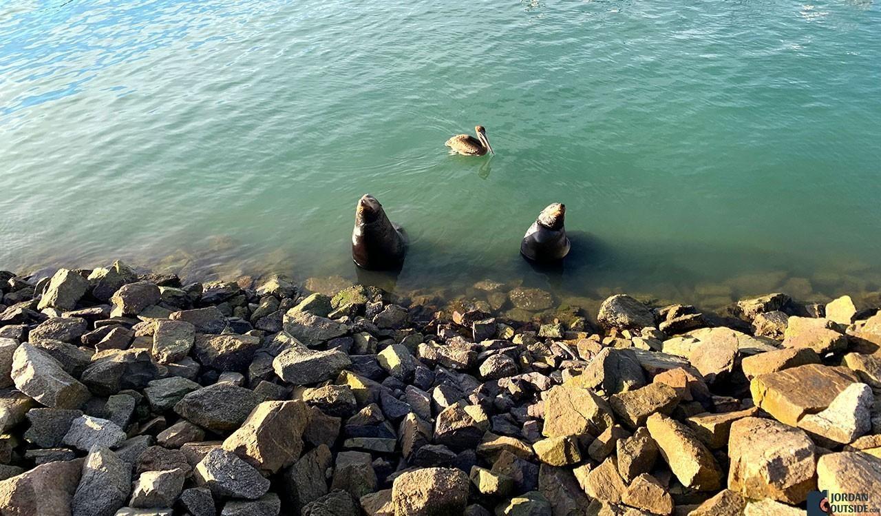 Sea Lions at Marina Fiesta Boardwalk