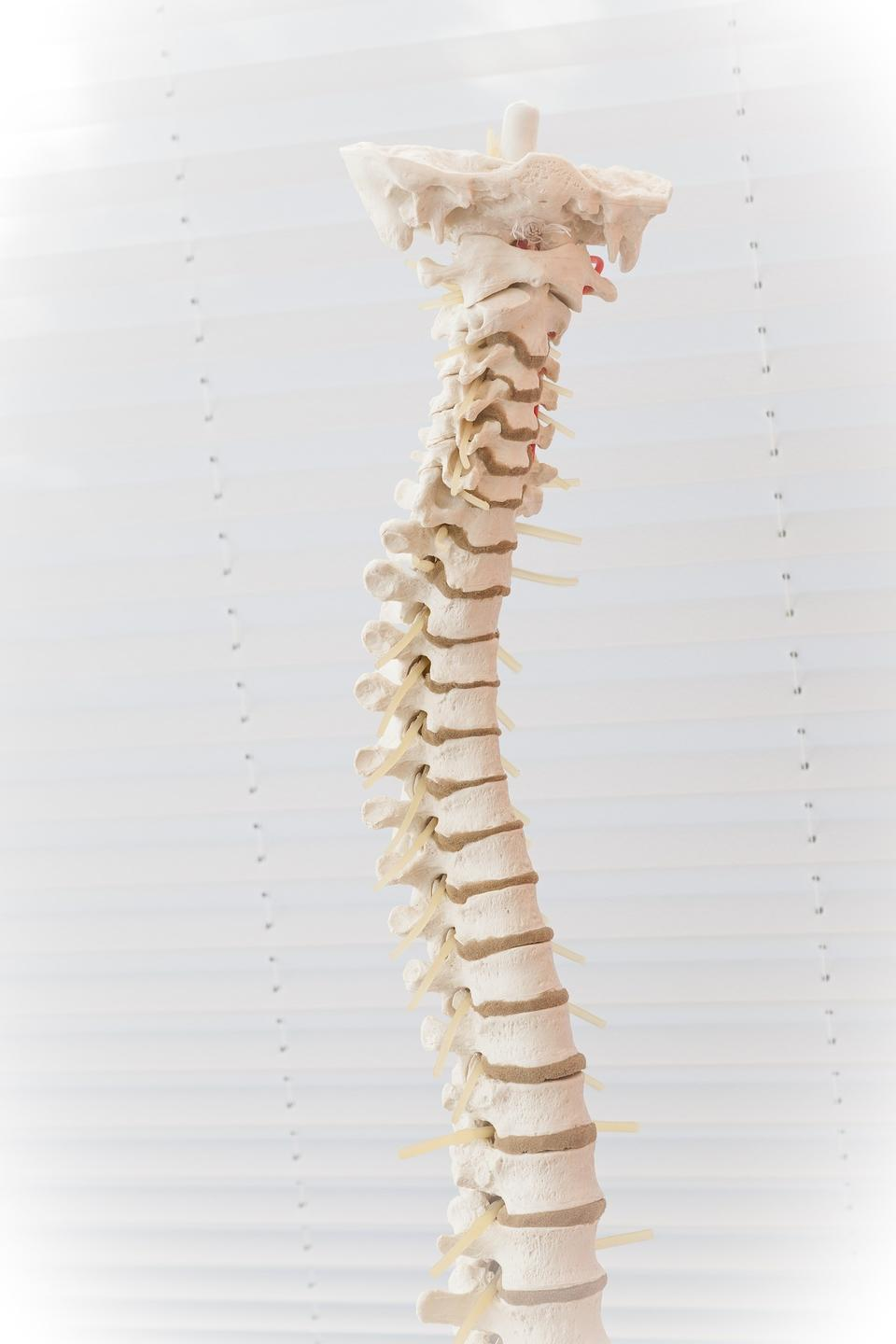 Our spines protects the body's superhighway to all of its complex systems.