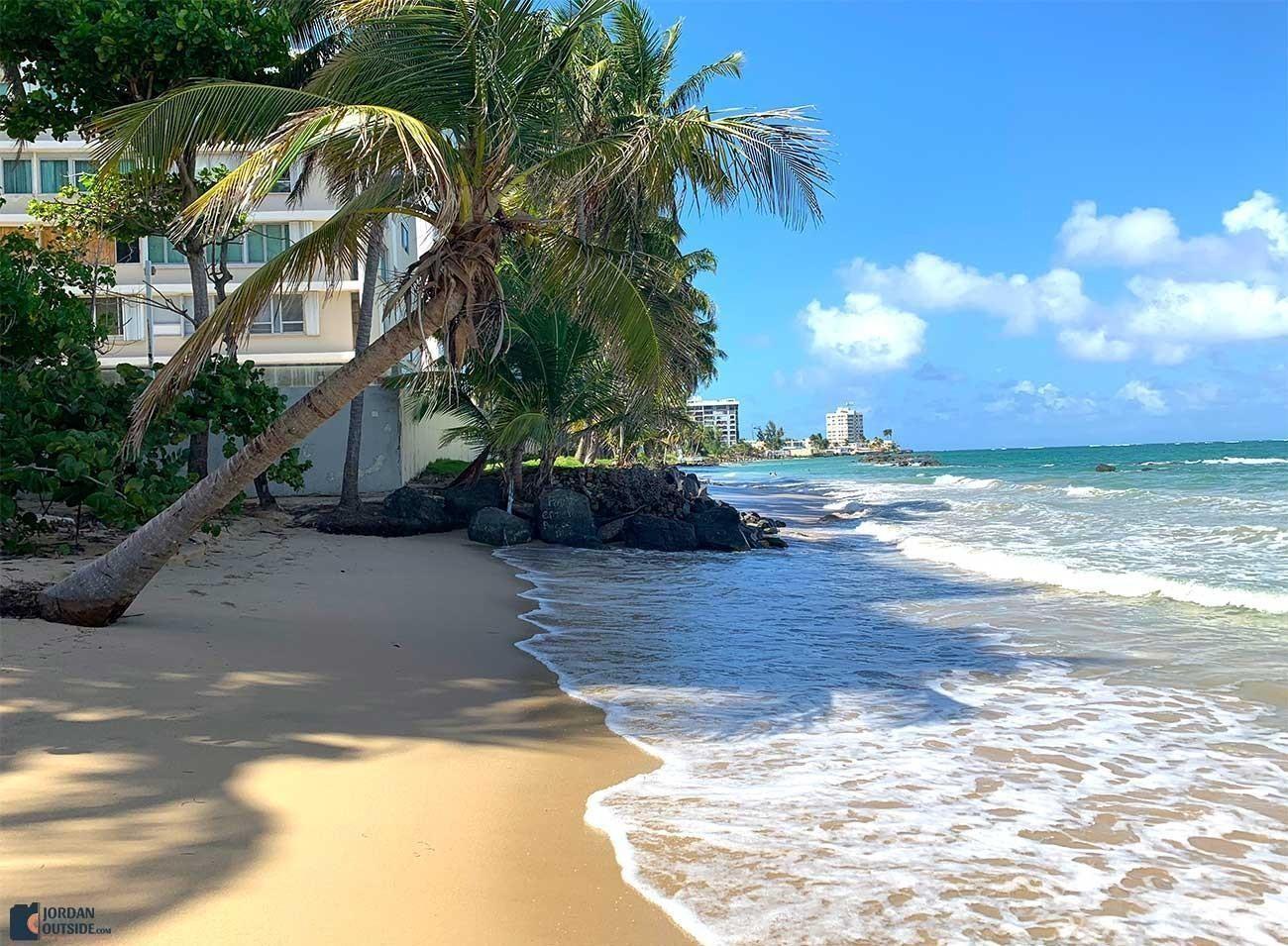 Palm trees on Hobie Beach