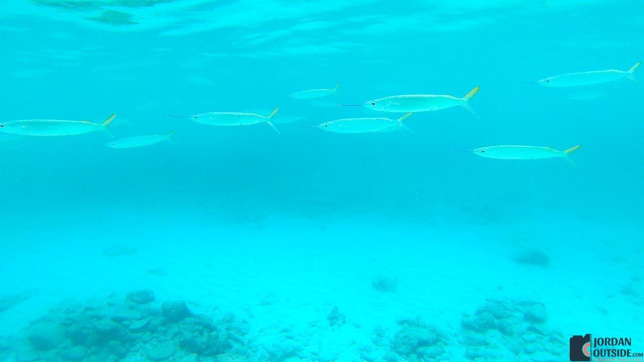 Fish at Coki Point Beach