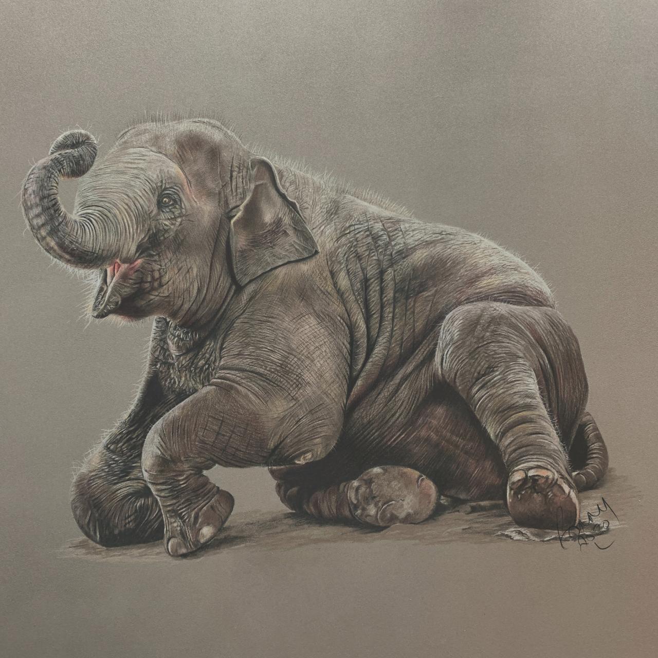 Baby Elephant - Coloured Pencil Drawing - Bonny Snowdon Fine Art