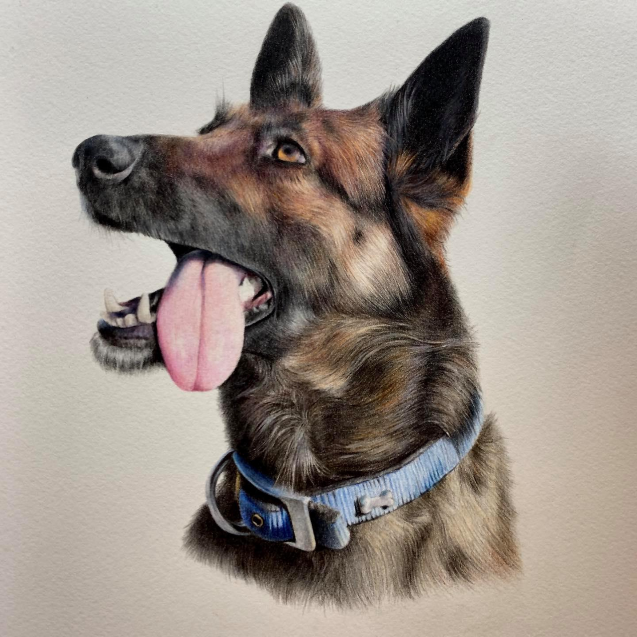German Shepherd - Coloured Pencil Drawing - Bonny Snowdon Fine Art
