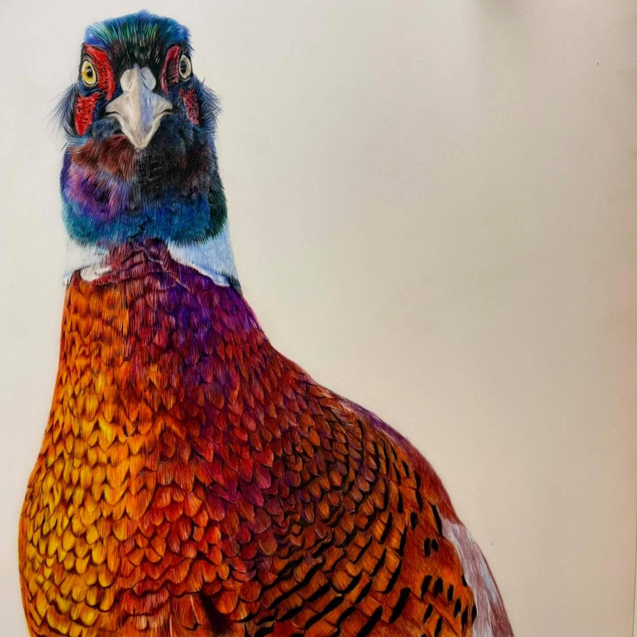 Pheasant - Coloured Pencil Drawing - Bonny Snowdon Fine Art