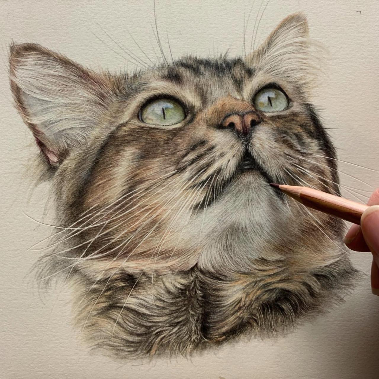 Cat Face - Coloured Pencil Drawing - Bonny Snowdon Fine Art