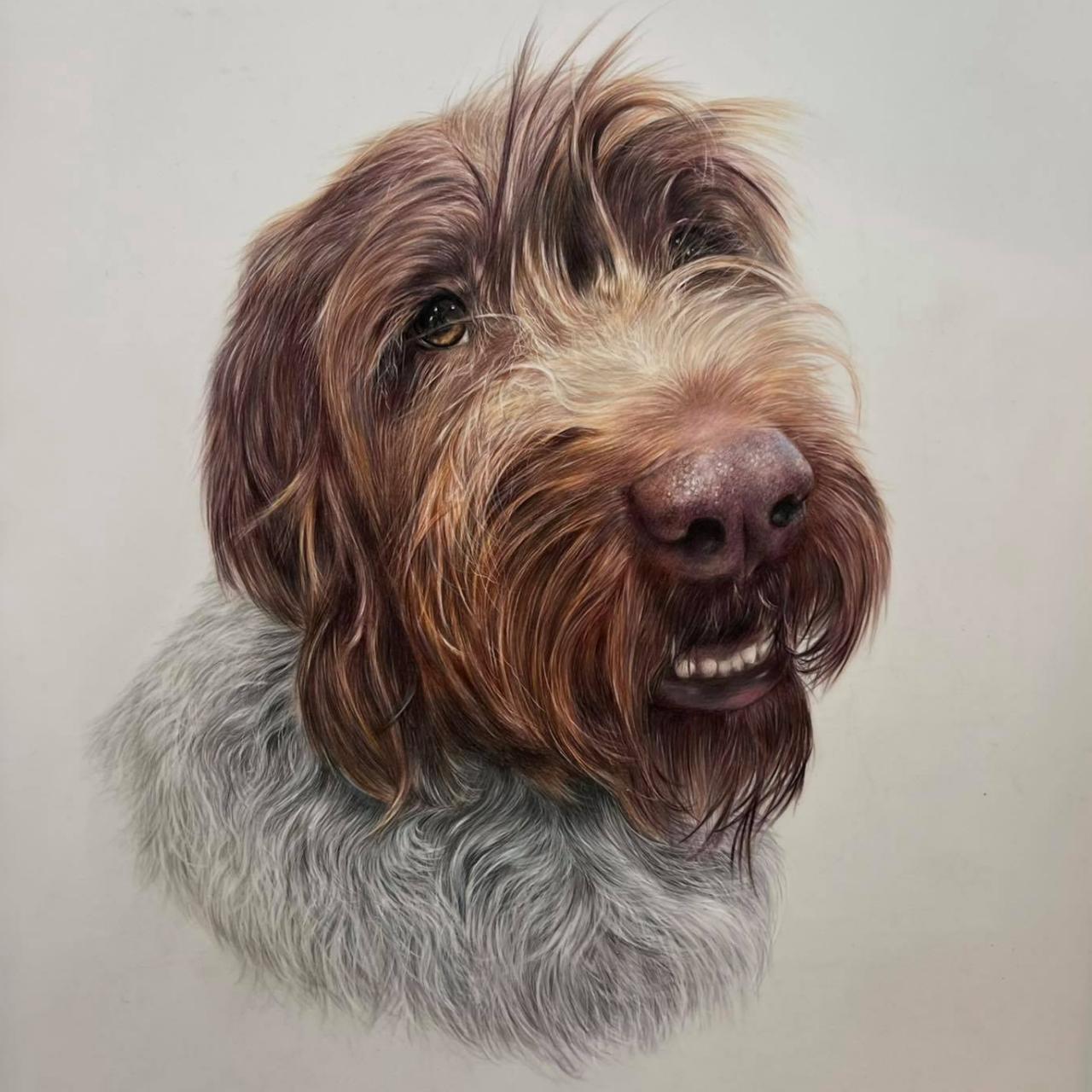 Shaggy Dog - Coloured Pencil Drawing - Bonny Snowdon Fine Art