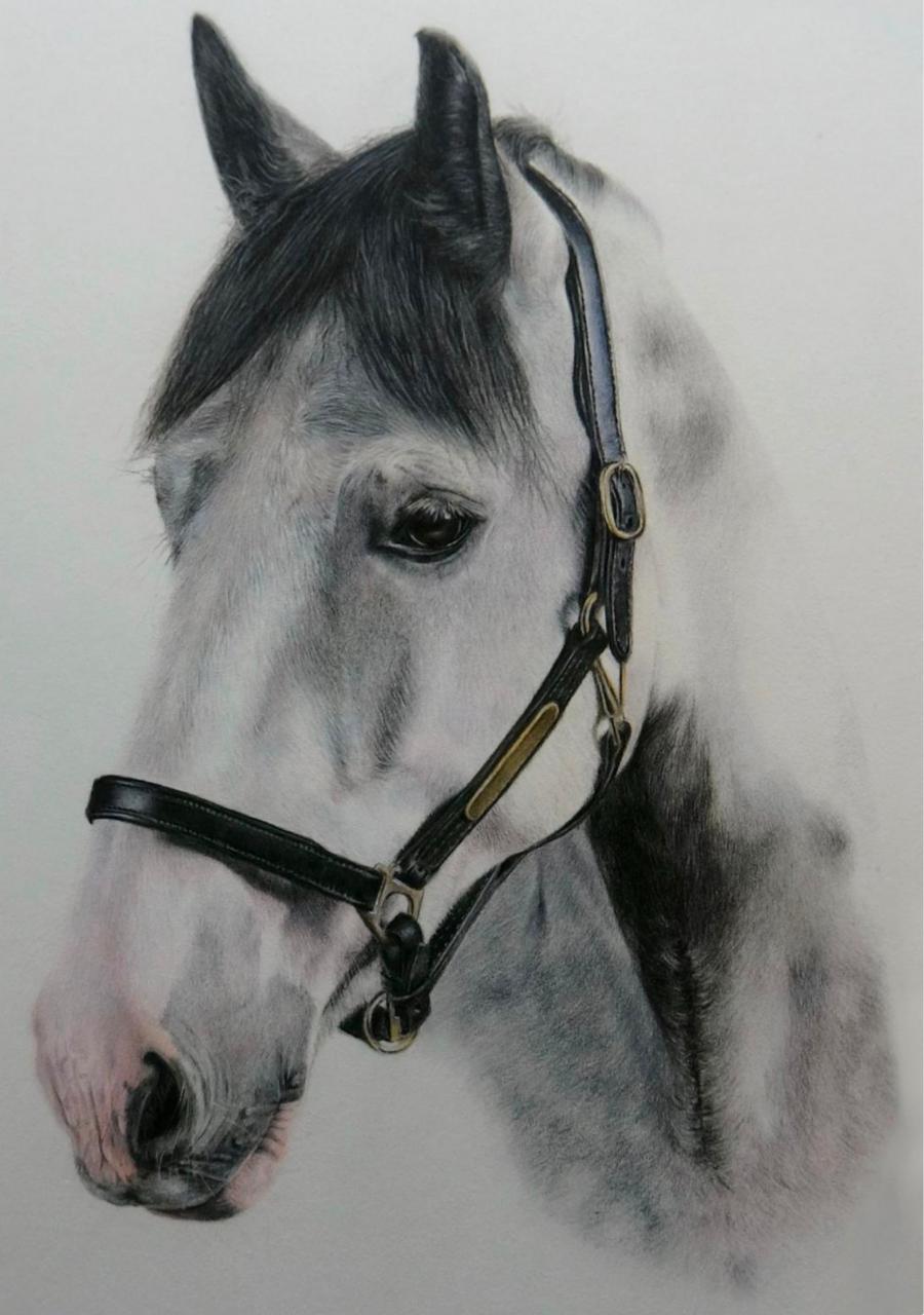 Pale Horse - Coloured Pencil Drawing - Bonny Snowdon Fine Art