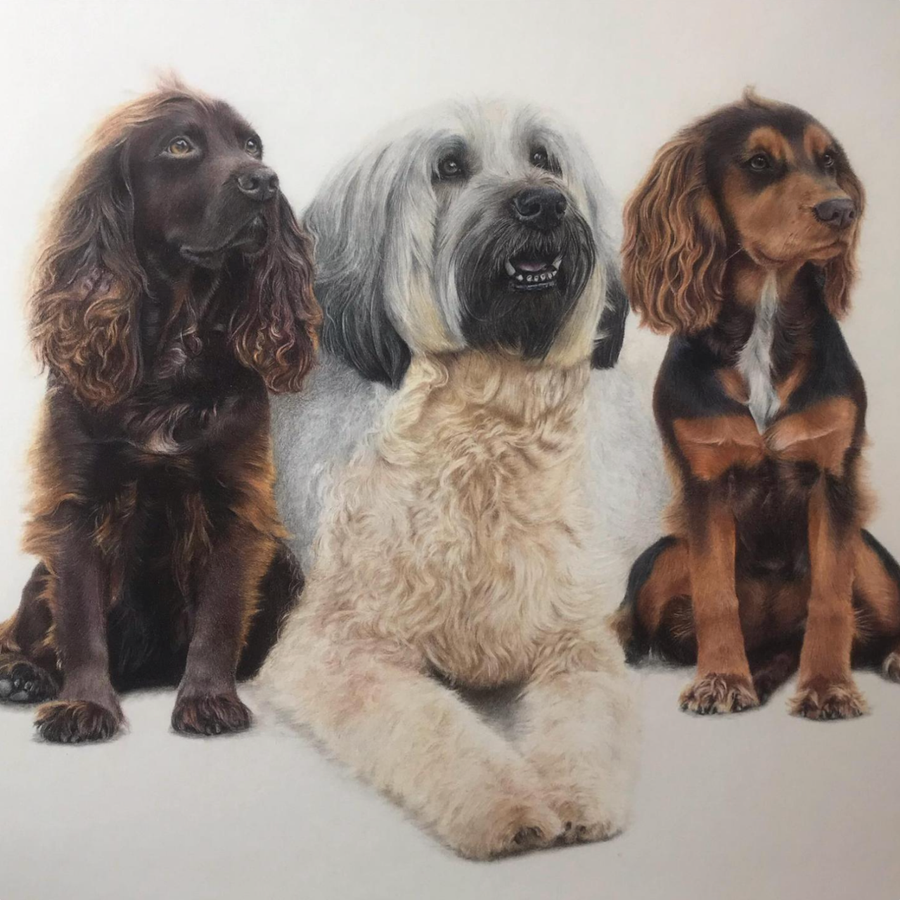 Three Dogs - Coloured Pencil Drawing - Bonny Snowdon Fine Art