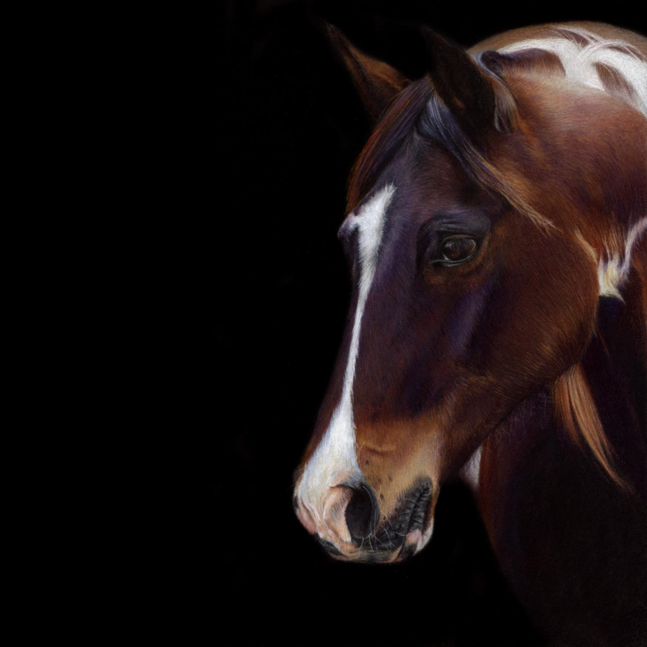 Out of the Darkness - Coloured Pencil Drawing - Bonny Snowdon Fine Art