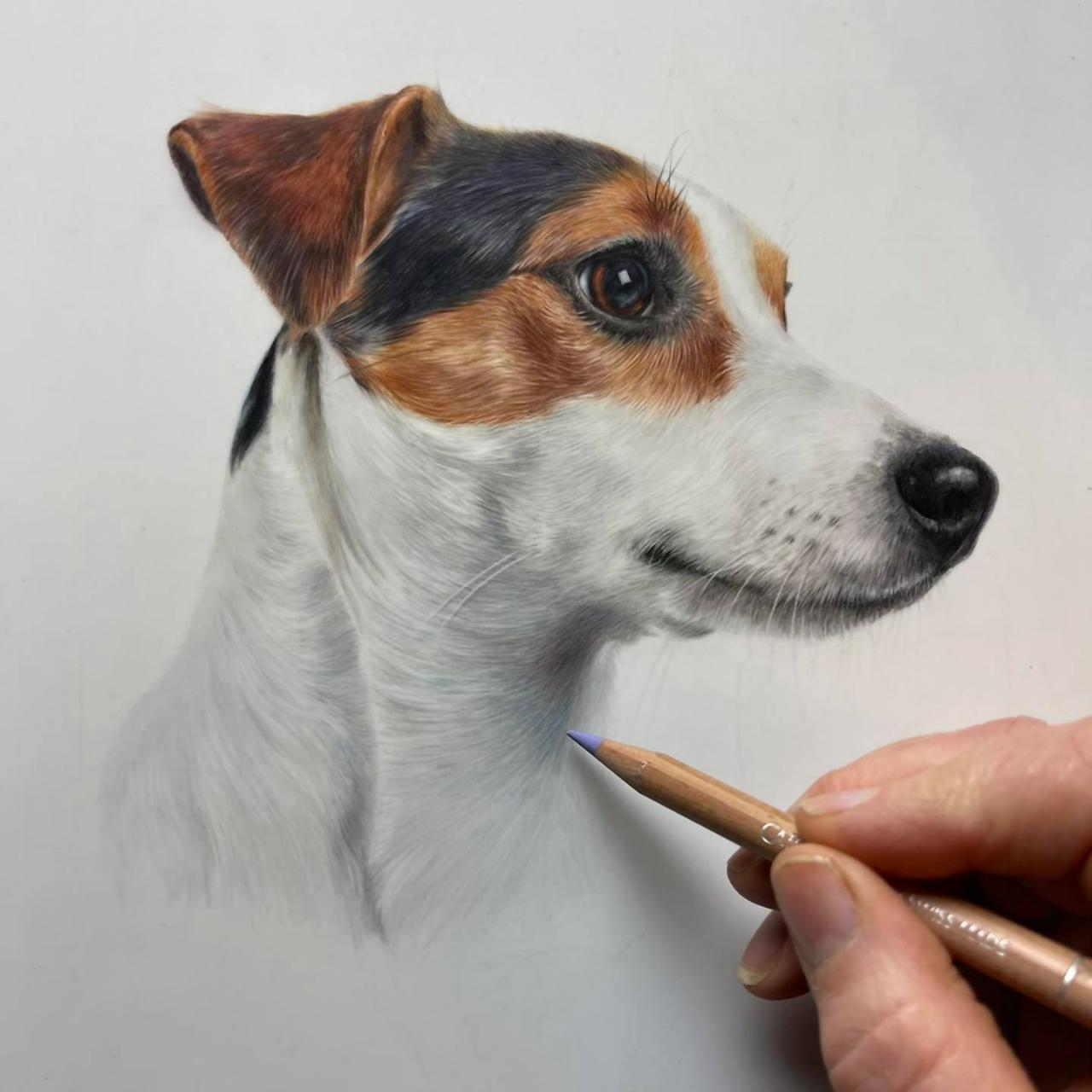 Jack Russell - Coloured Pencil Drawing - Bonny Snowdon Fine Art