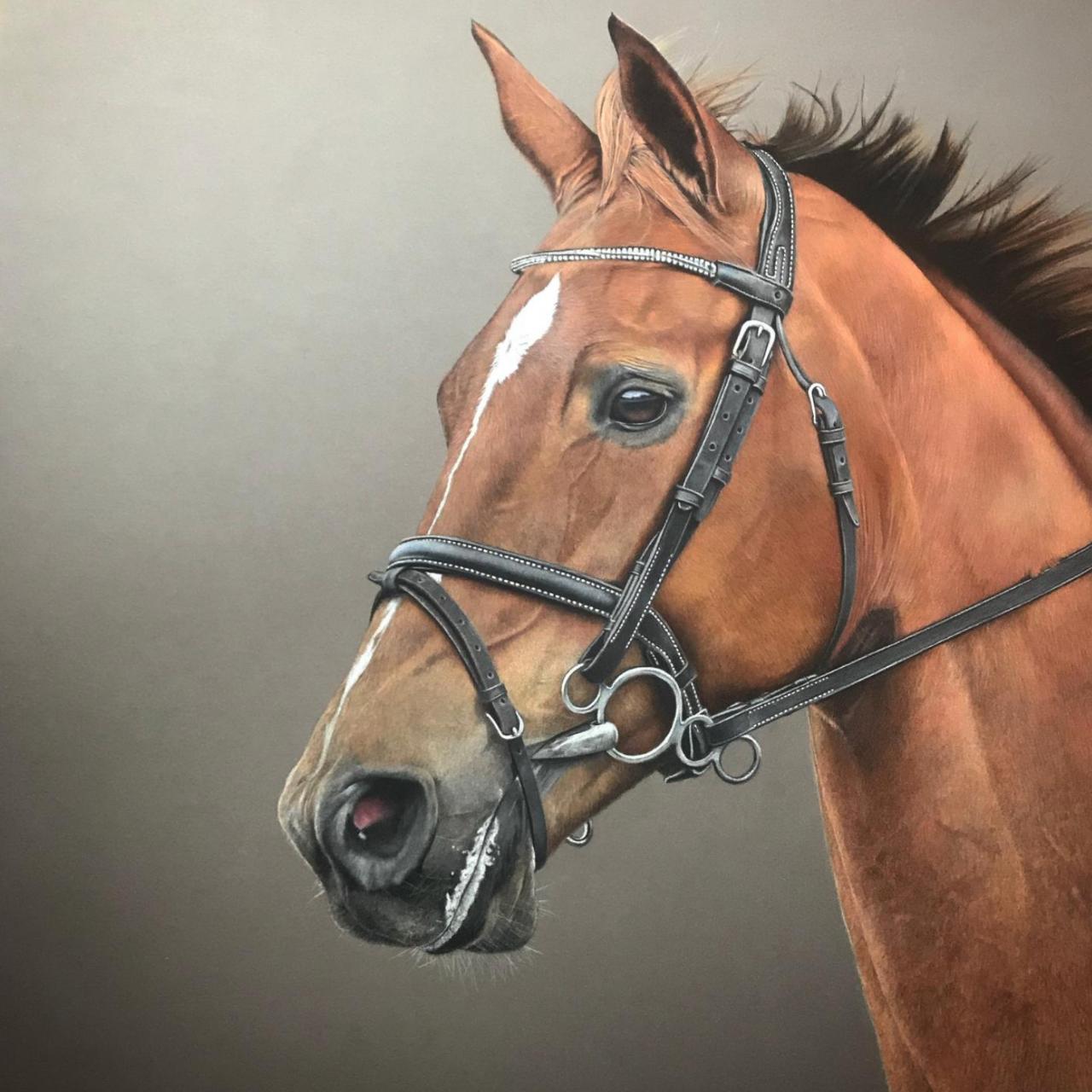Bay Horse - Coloured Pencil Drawing - Bonny Snowdon Fine Art