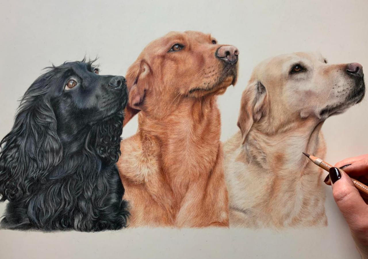 Dogs - Coloured Pencil Drawing - Bonny Snowdon Fine Art