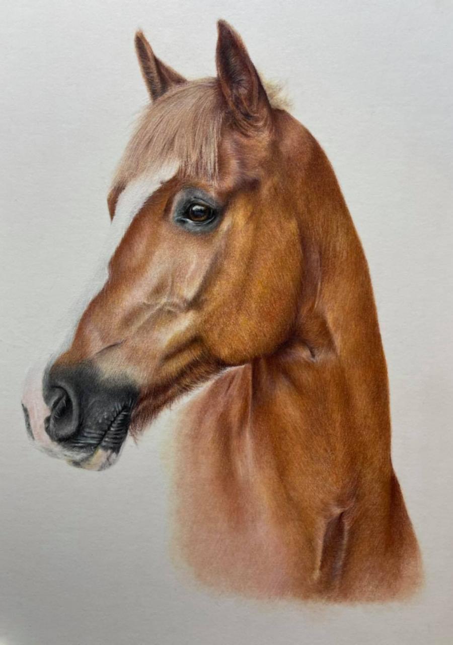 Horse Head - Coloured Pencil Art - Bonny Snowdon Fine Art