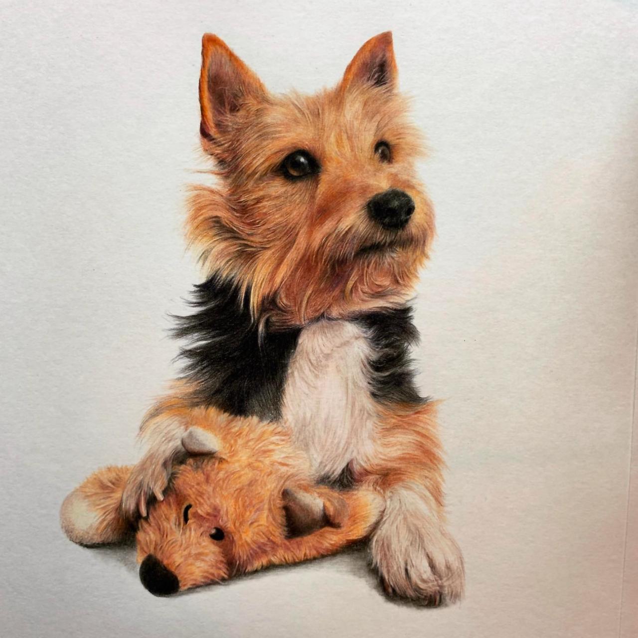 Ginger Dog - Coloured Pencil Drawing - Bonny Snowdon Fine Art