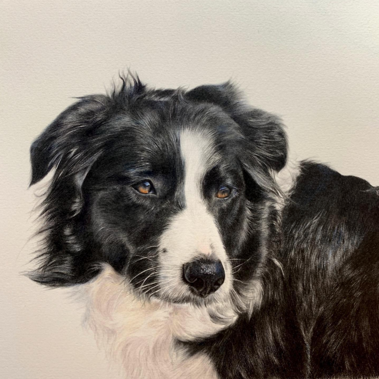 Sheep Dog - Coloured Pencil Drawing - Bonny Snowdon Fine Art