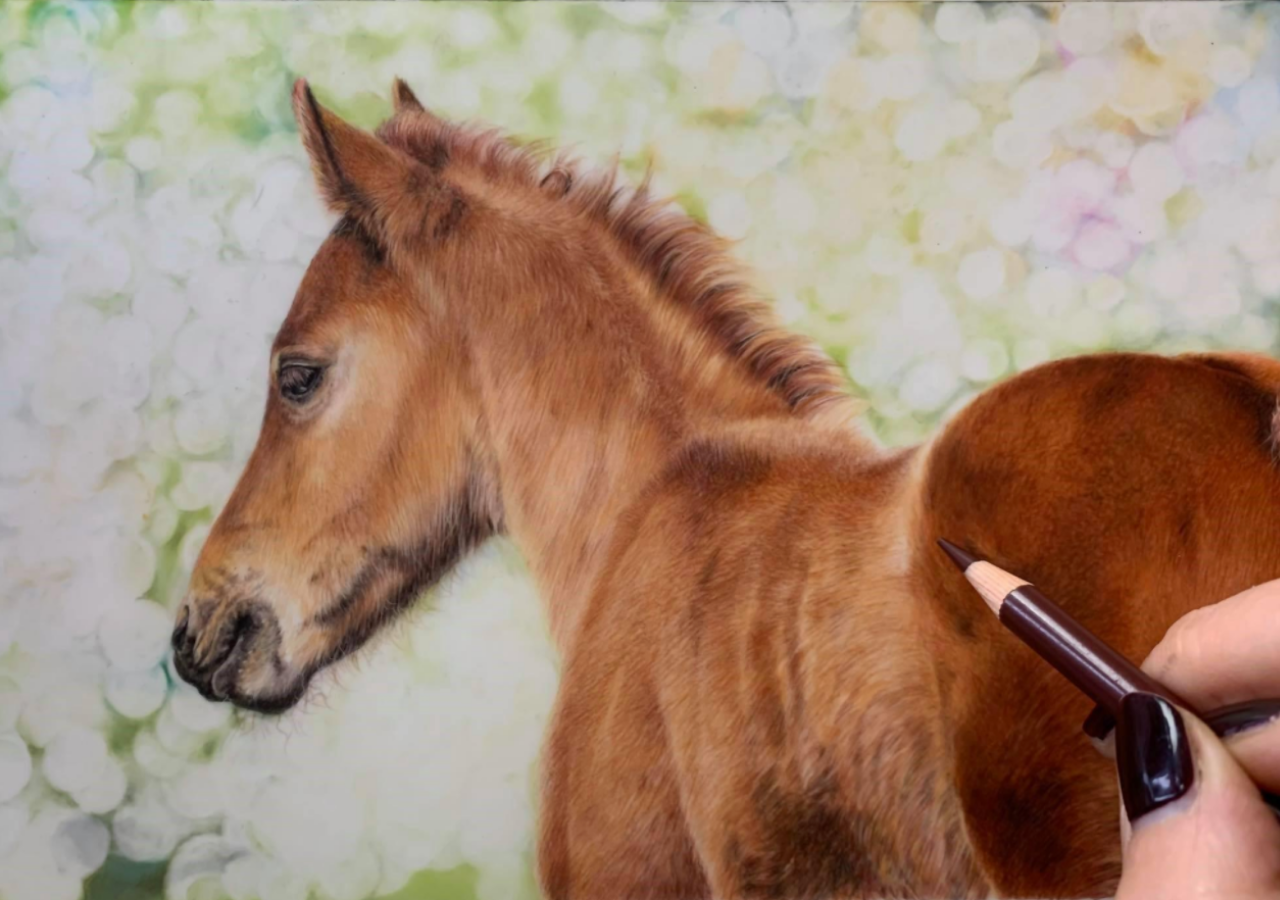 Spring Watch - Coloured Pencil Drawing - Bonny Snowdon Fine Art