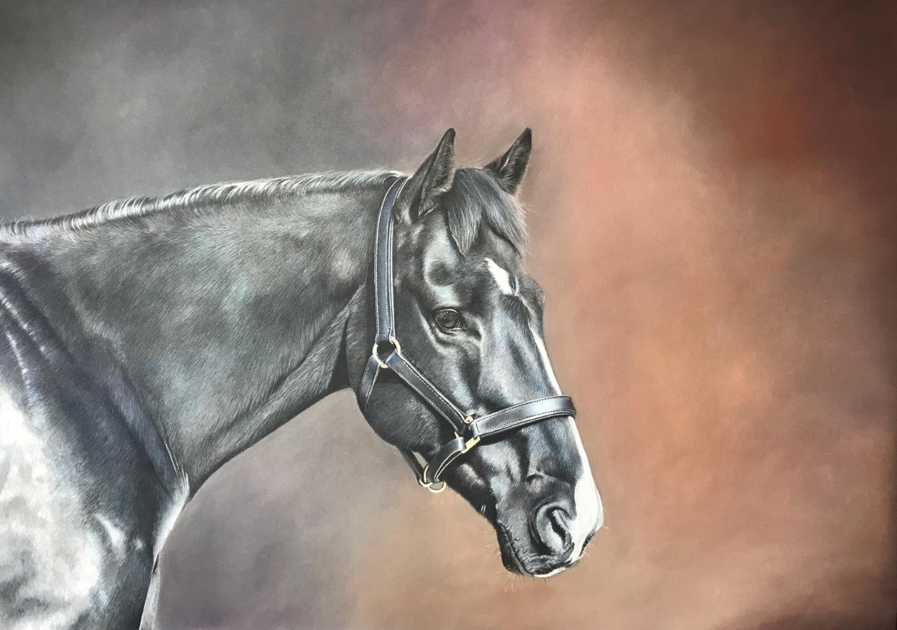 Black Horse - Coloured Pencil Drawing - Bonny Snowdon Fine Art