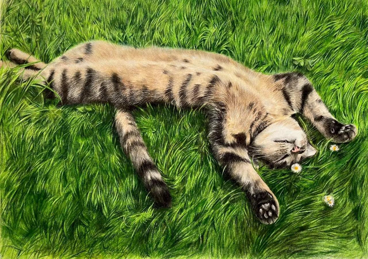 Tabby Cat - Coloured Pencil Drawing - Bonny Snowdon Fine Art
