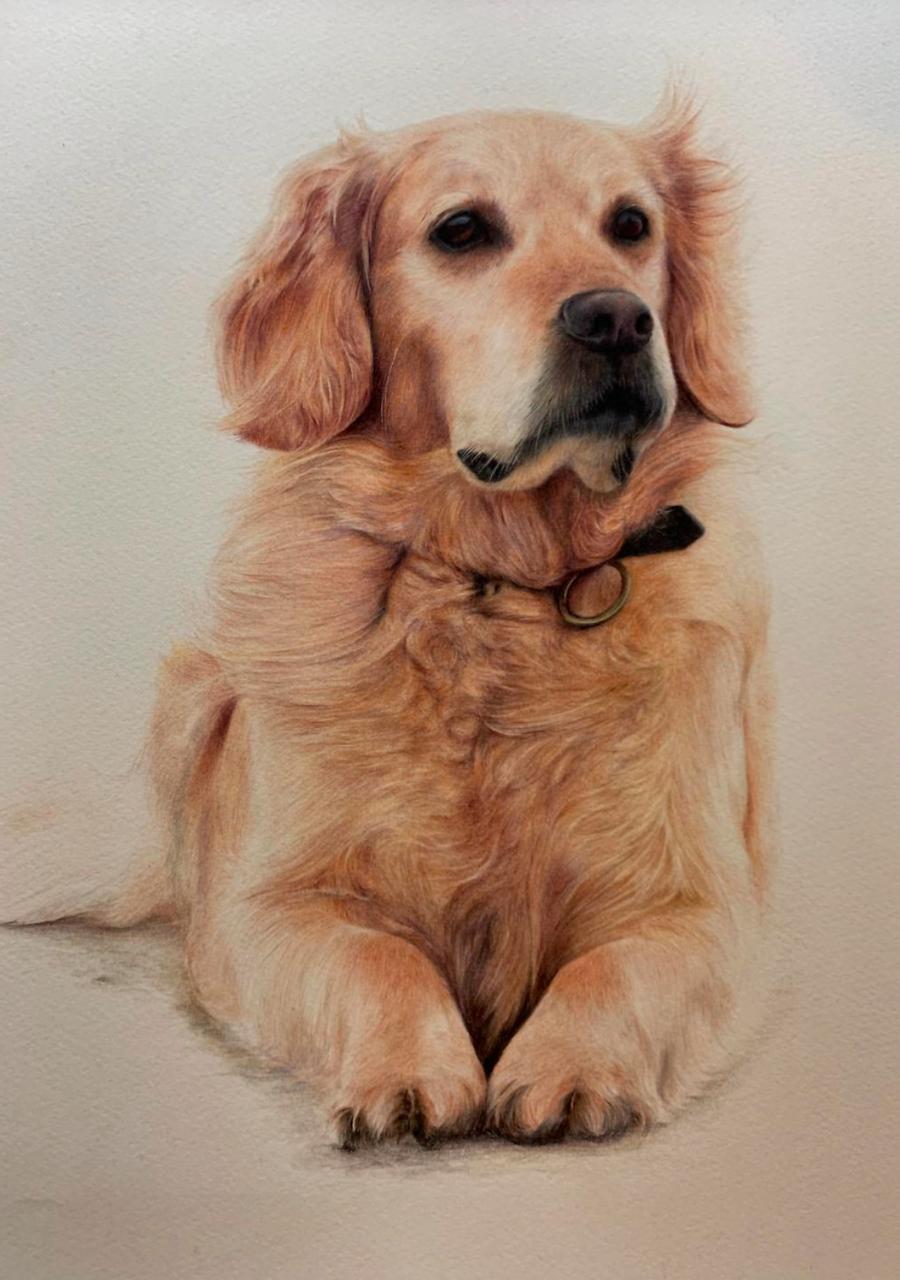 Meg - Coloured Pencil Drawing - Bonny Snowdon Fine Art