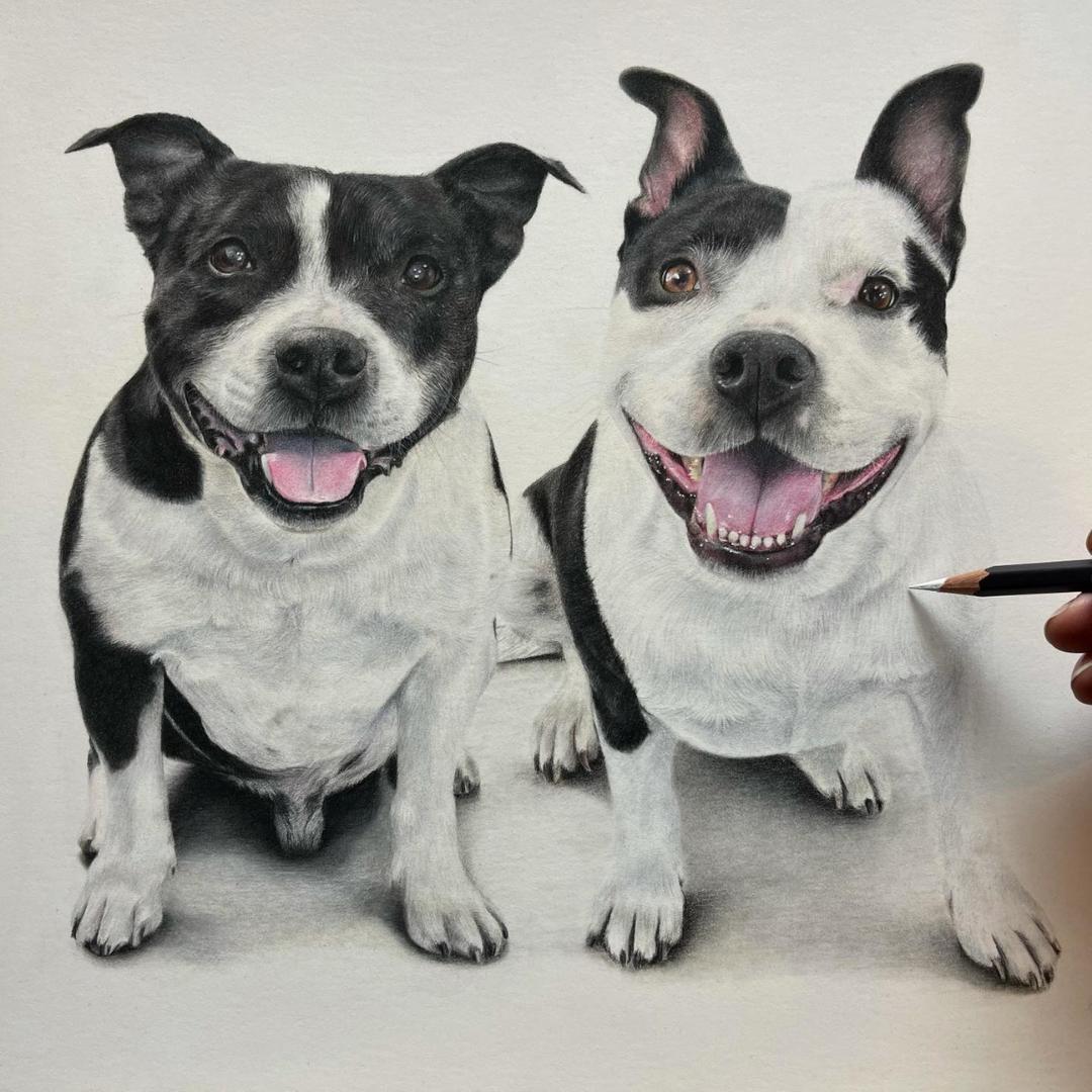 Dog Portraits - Commissions - Bonny Snowdon Fine Art