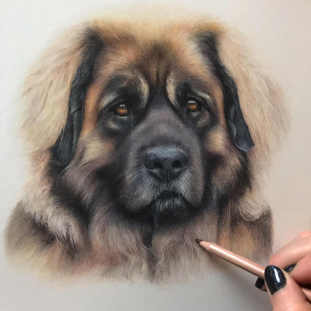 Dog Portrait - Commissions - Bonny Snowdon Fine Art