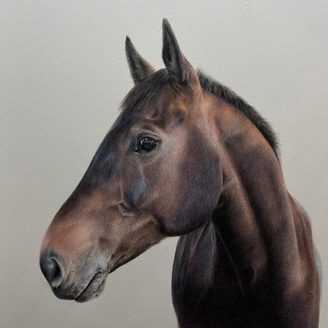 Dark Horse Portrait - Commissions - Bonny Snowdon Fine Art