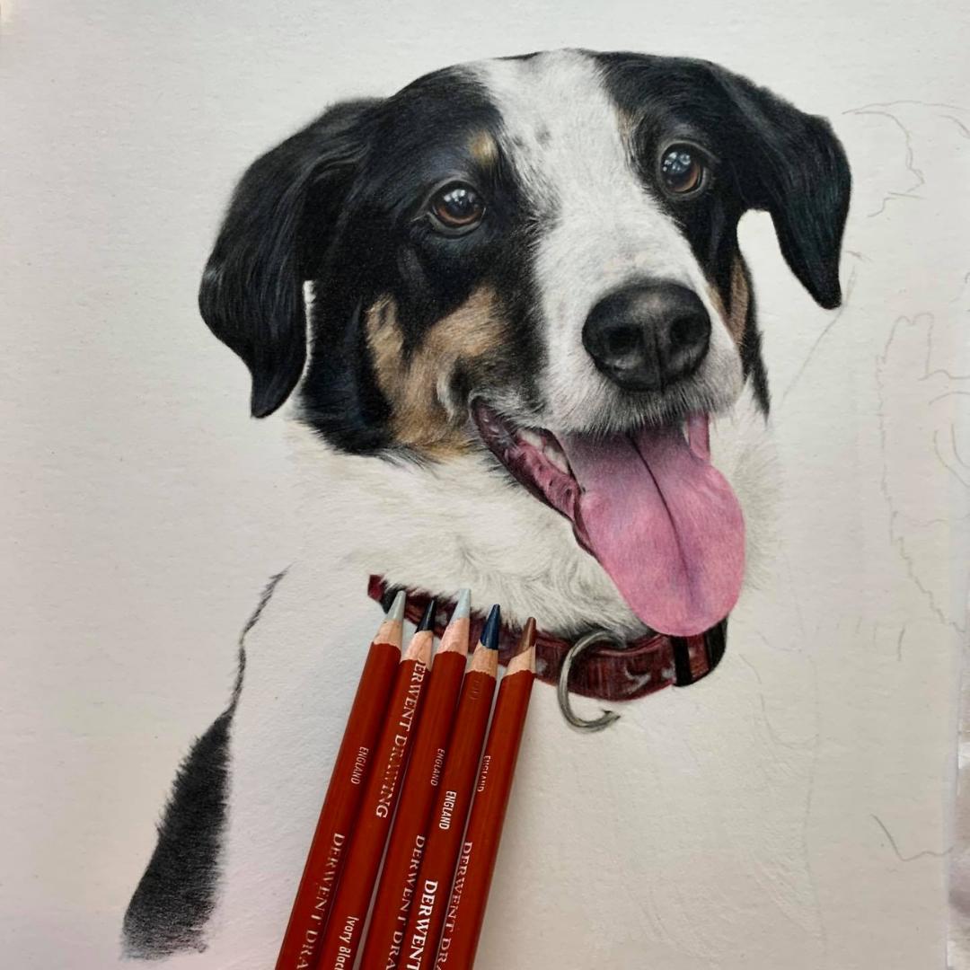 Dog Portrait with Pencils - Commissions - Bonny Snowdon Fine Art