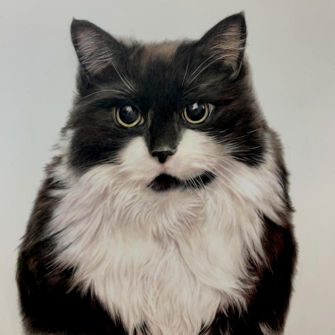 Cat Portrait - Commissions - Bonny Snowdon Fine Art