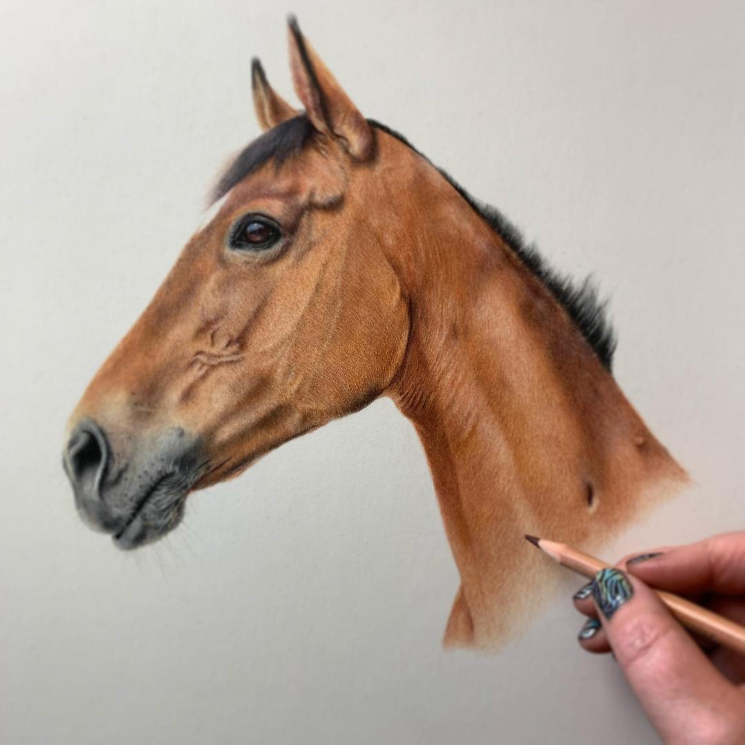Bay Horse Portrait - Commissions - Bonny Snowdon Fine Art