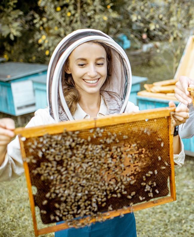 new beekeeper from online class