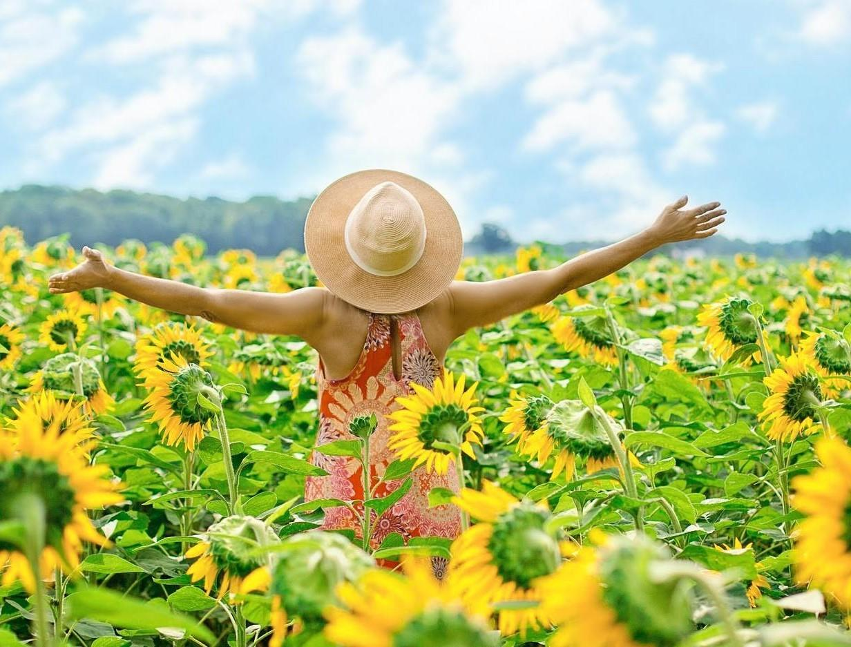 menopause woman standing in middle of a sunflower field