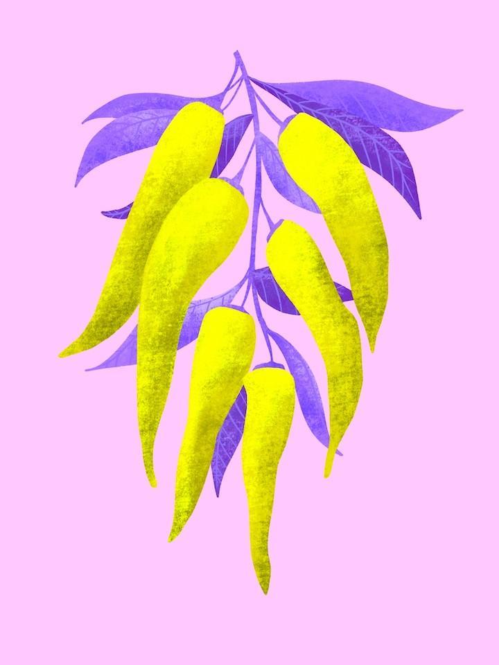 neon color chili pepper illustration