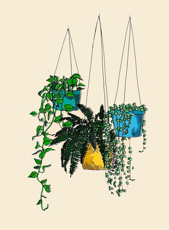 hanging plants illustration