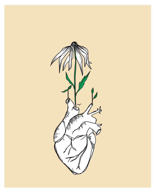 anatomical heart illustration
