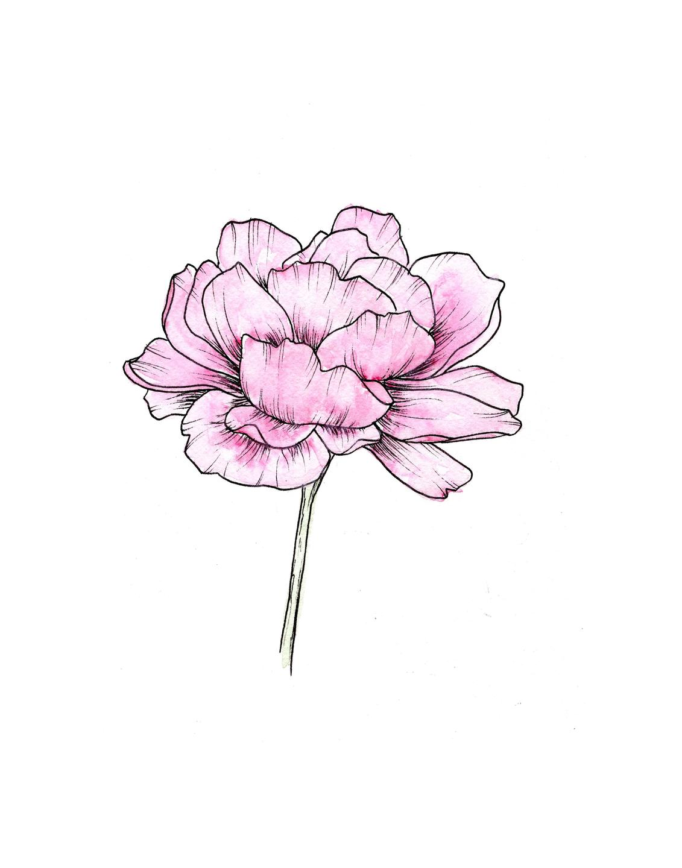 peony watercolor