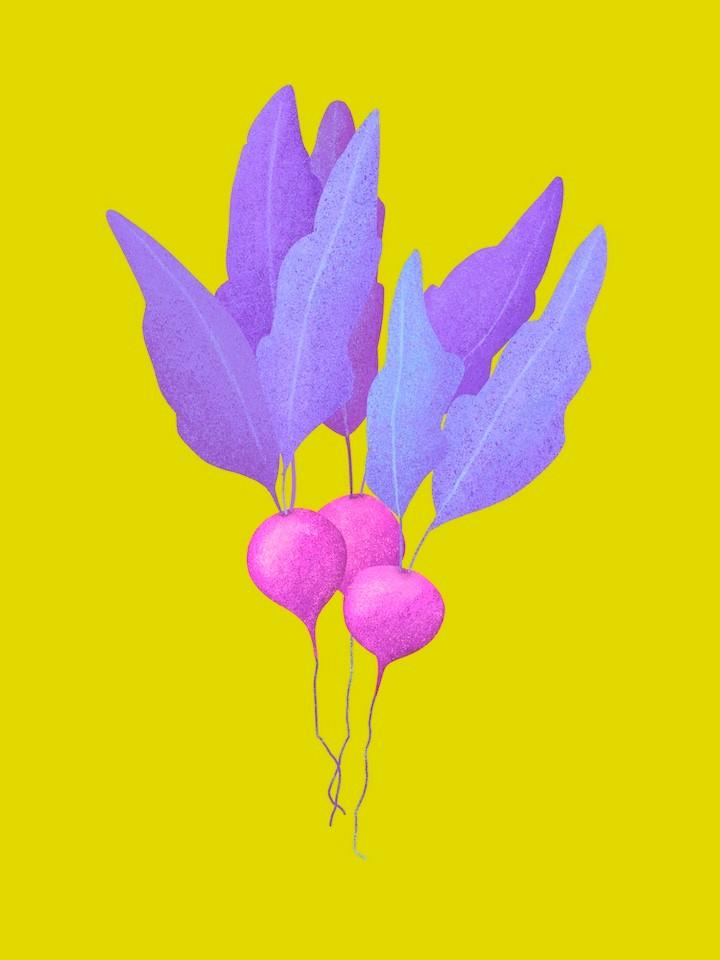 radish illustration