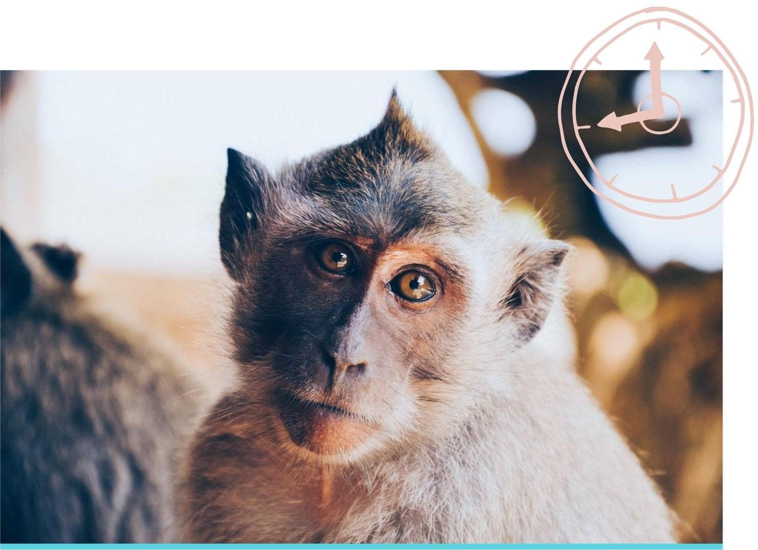 monkey looking at camera with questioning look