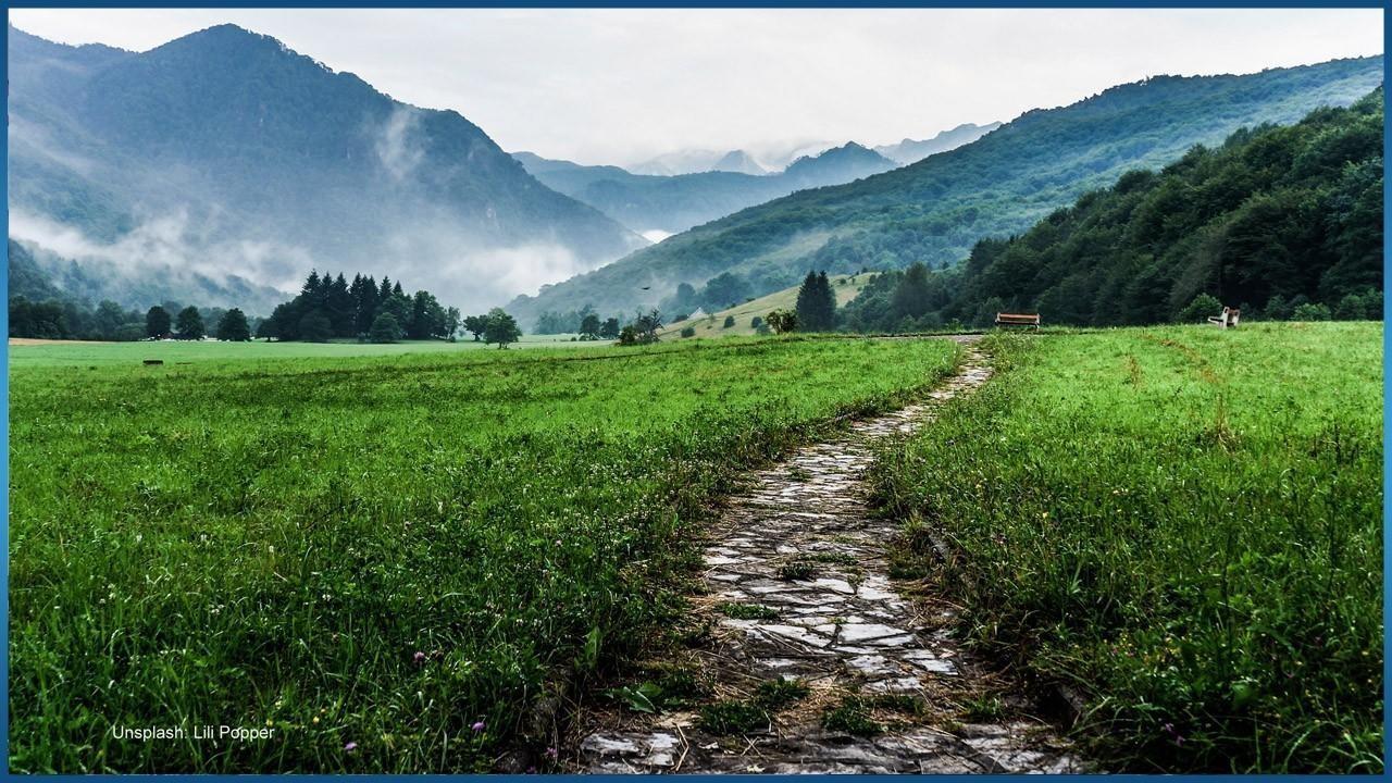 Rocky path in grassy field