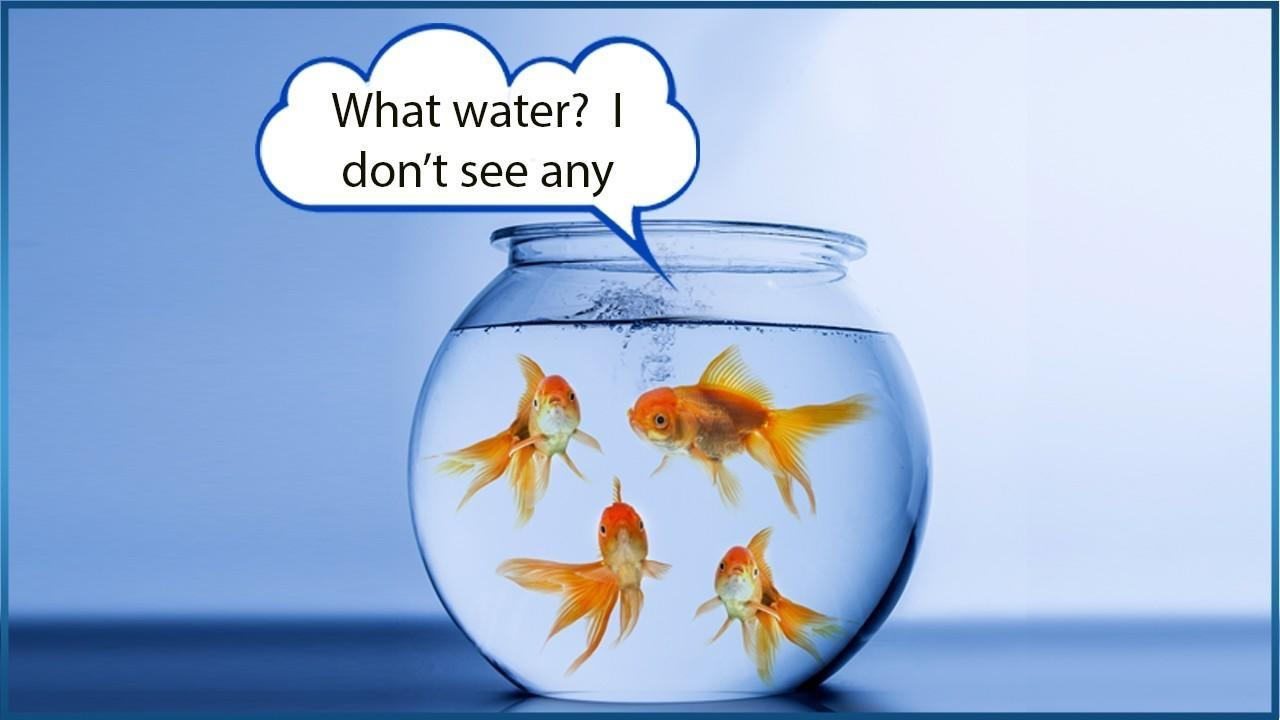 """Fish swimming in a bowl asking """"Water? What water?"""""""