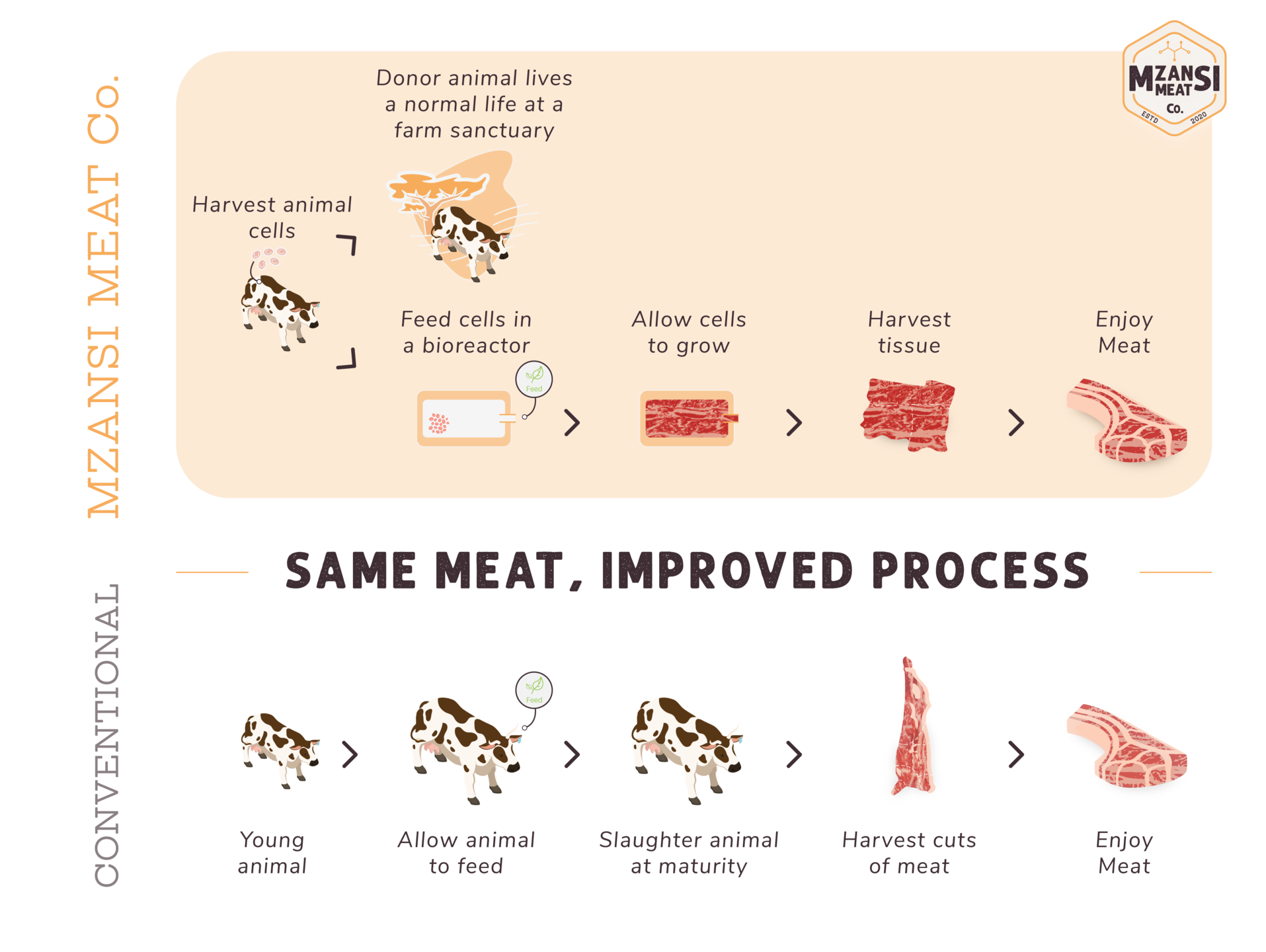 Making meat from cells by Mzansi Meat