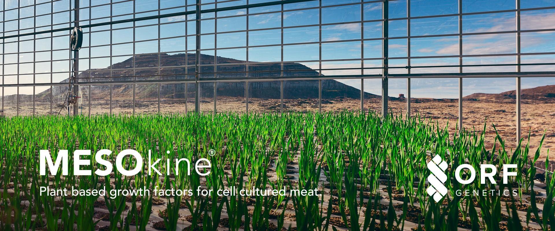 Barley growing in greenhouse