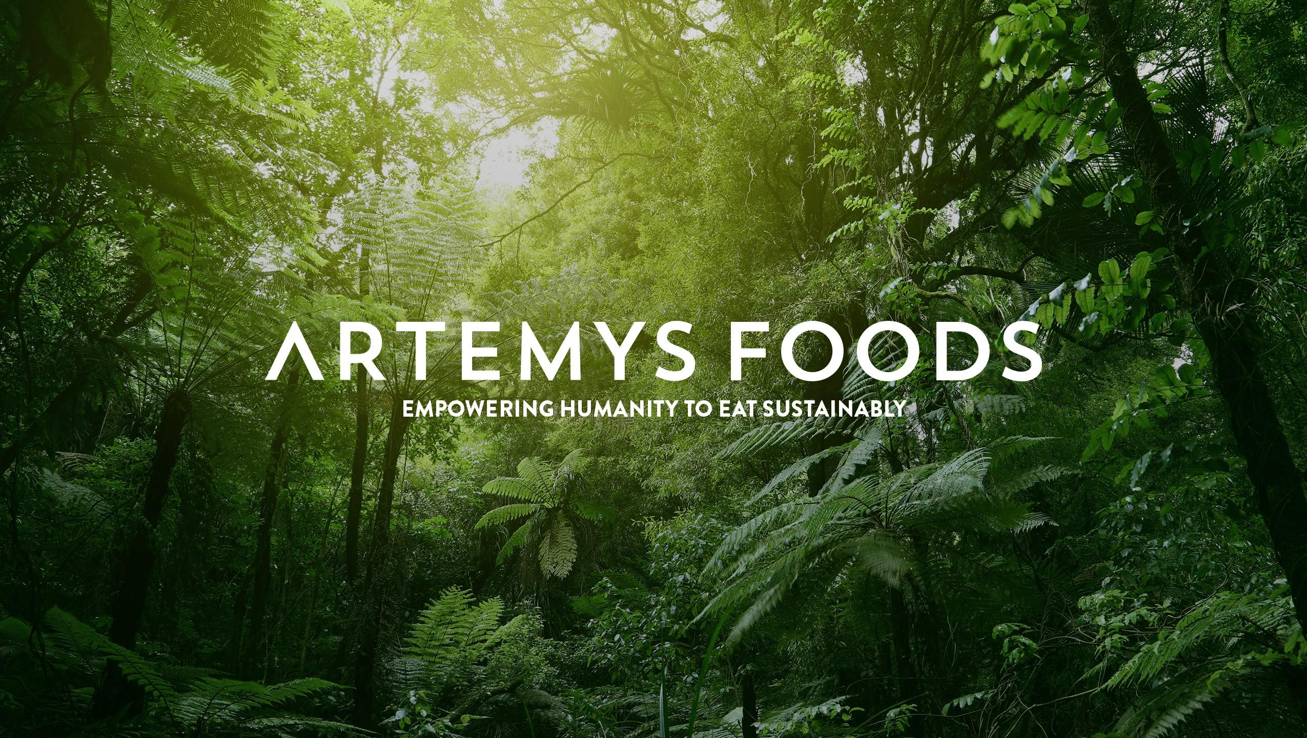 Green plants in rainforest