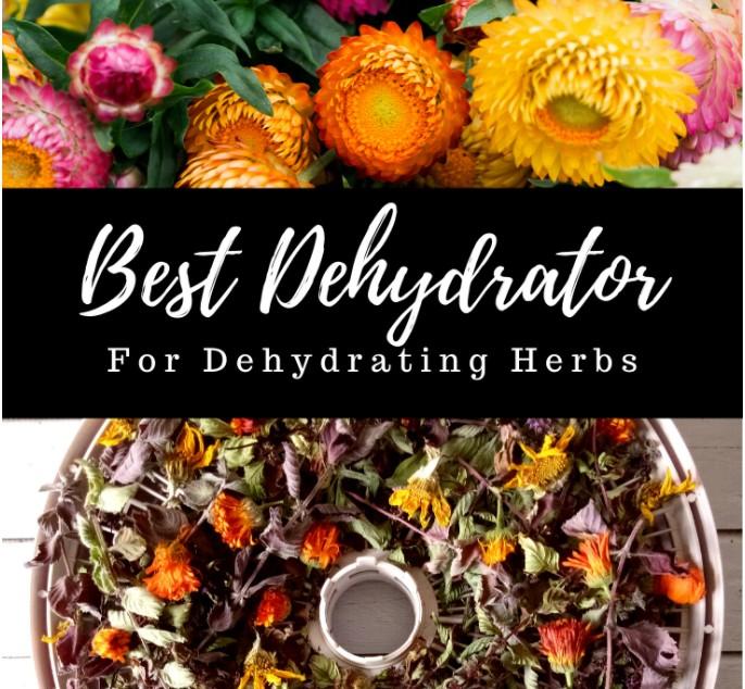 Best Dehydrator for Herbs