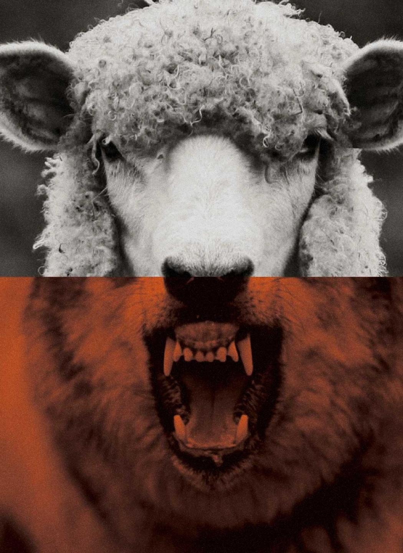Half-wolf, half-sheep