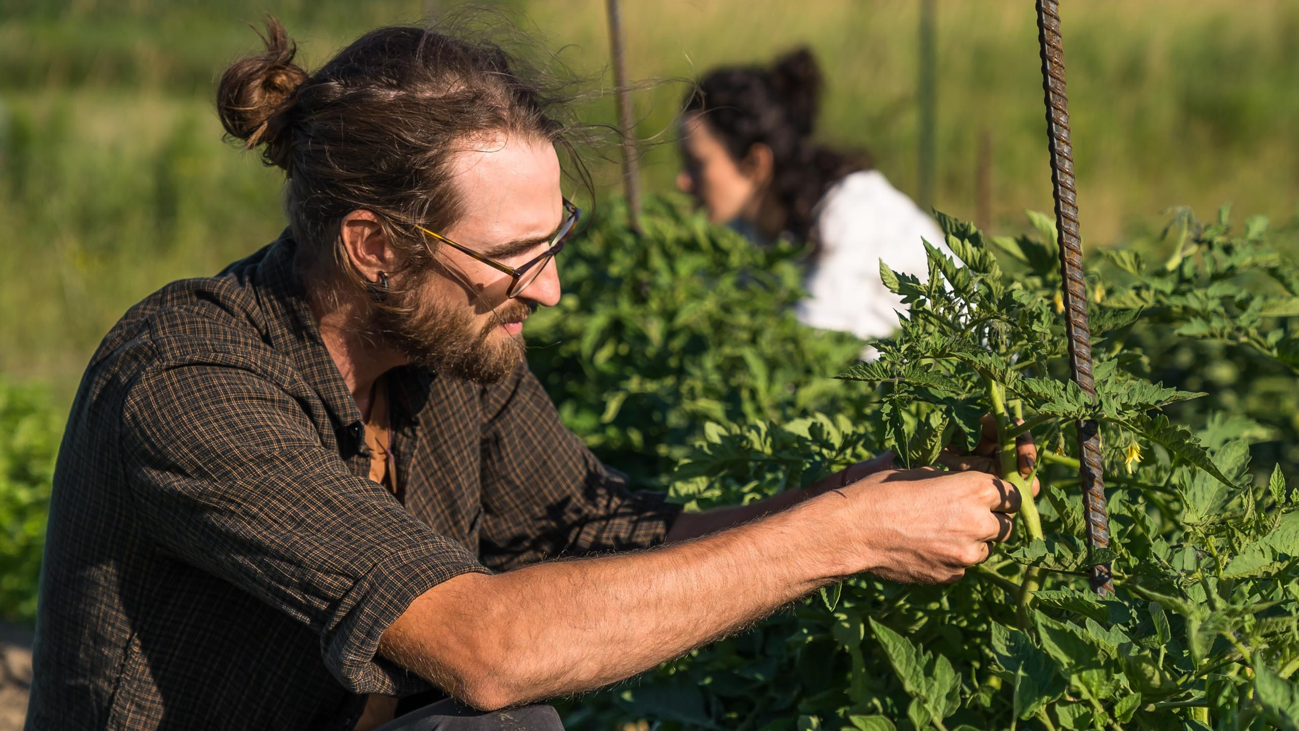 Expert Maraîcher, savoir-faire fermier