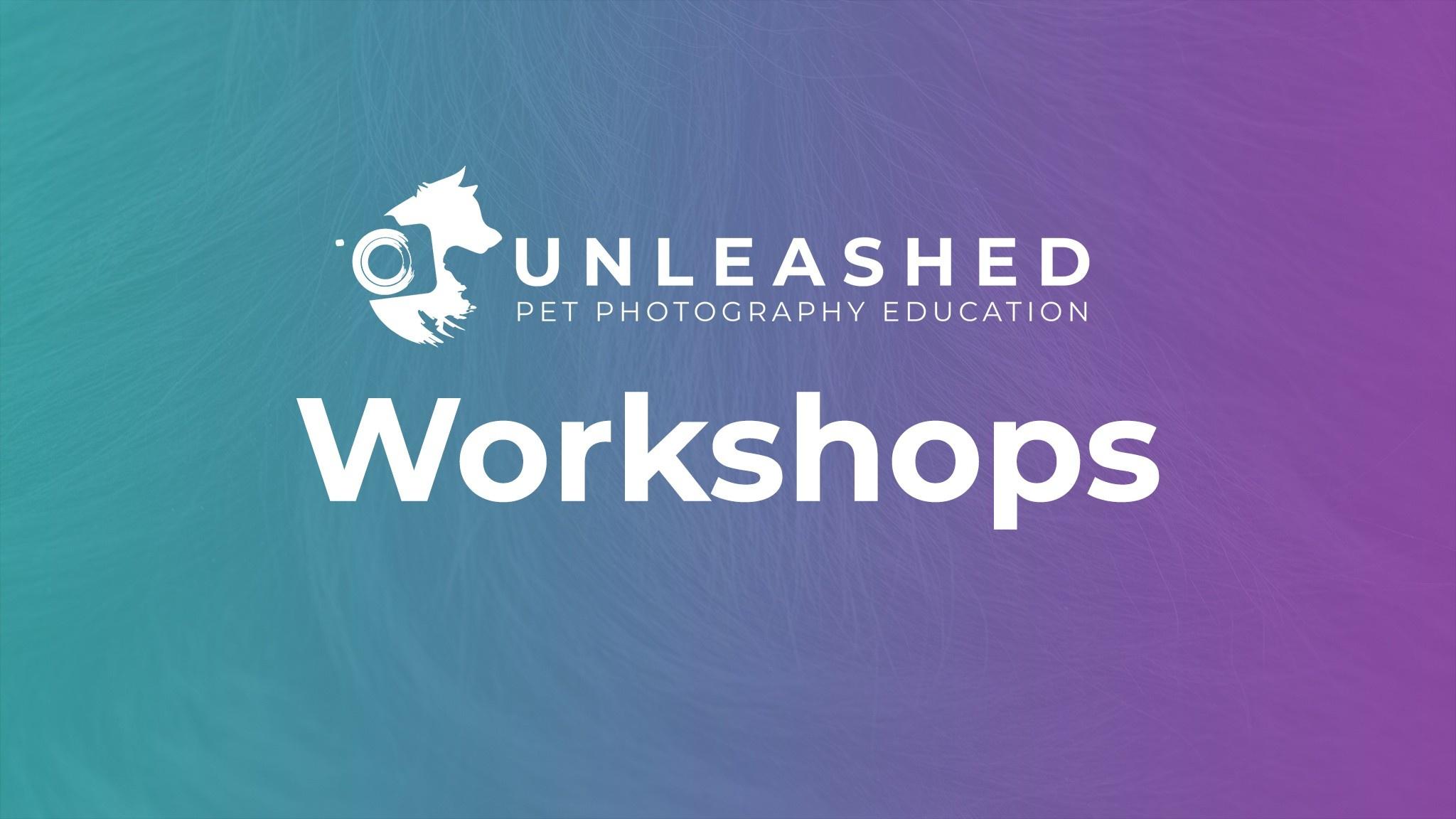 Premium Pet Photography Workshops and Retreats